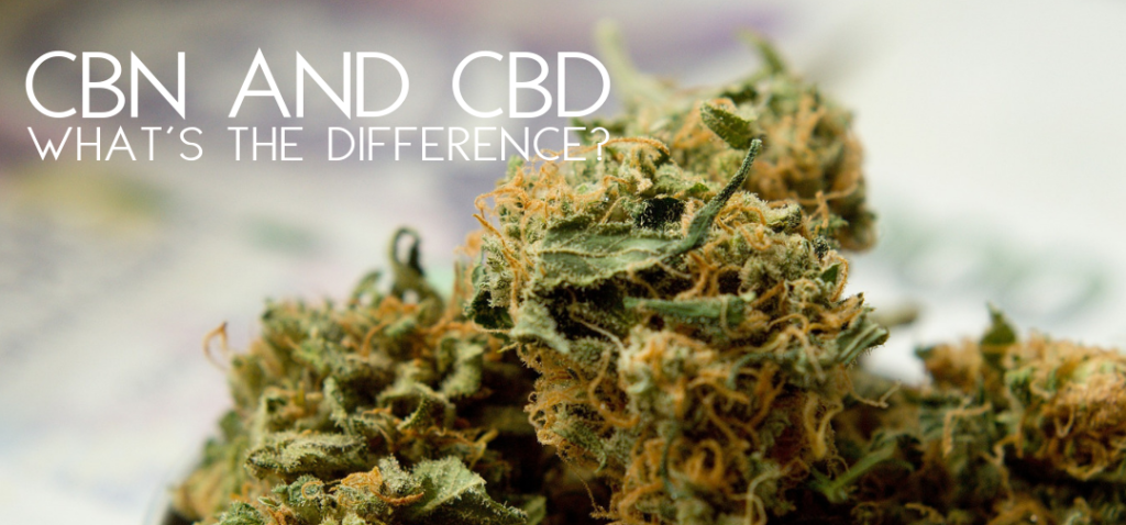 What is the difference between CBN oil and CBD oil?